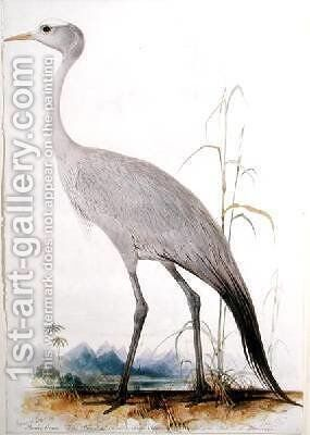 Stanley Crane Scops paradisea by Edward Lear - Reproduction Oil Painting
