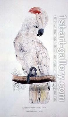 Salmon-Crested Cockatoo by Edward Lear - Reproduction Oil Painting