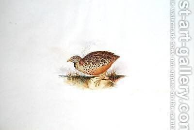 Grouse-like bird by Edward Lear - Reproduction Oil Painting