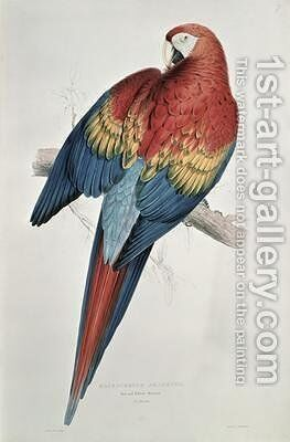Red and Yellow Macaw by Edward Lear - Reproduction Oil Painting