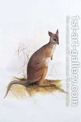 Macropus by Edward Lear - Reproduction Oil Painting