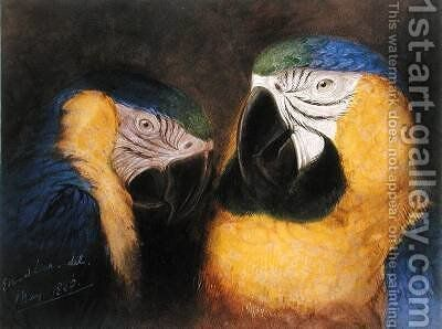 Study of Heads of Ara Ararauna by Edward Lear - Reproduction Oil Painting