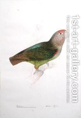 Psittacus by Edward Lear - Reproduction Oil Painting