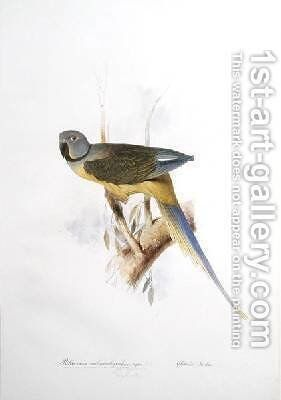 Paloeornis melanorhynchus Syties by Edward Lear - Reproduction Oil Painting