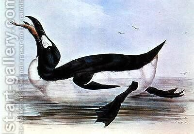 The Great Auk illustration from The Birds of Europe by Edward Lear - Reproduction Oil Painting
