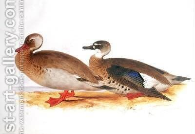 Two Ducks by Edward Lear - Reproduction Oil Painting