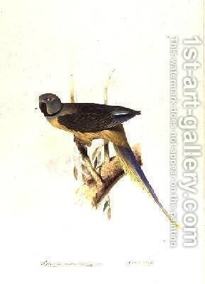 Parakeet Palaeornis Melanorhymhus by Edward Lear - Reproduction Oil Painting