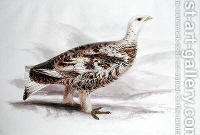 Ptarmigan in mid plumage by Edward Lear - Reproduction Oil Painting