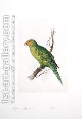 Trichoglossus euteles Femm by Edward Lear - Reproduction Oil Painting