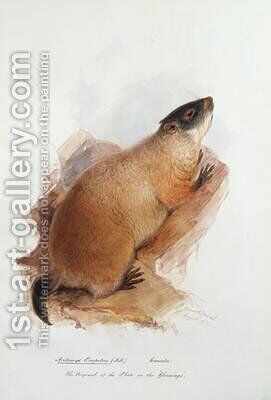 Arctomys empetra Pallas by Edward Lear - Reproduction Oil Painting