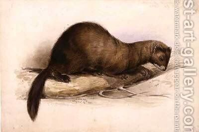 A Weasel by Edward Lear - Reproduction Oil Painting