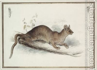 The Polecat by Edward Lear - Reproduction Oil Painting