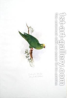 Psittacula floriceps by Edward Lear - Reproduction Oil Painting