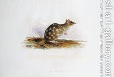 Dasyurus maugei mas by Edward Lear - Reproduction Oil Painting