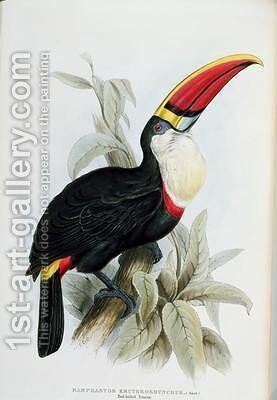 Red-Billed Toucan by Edward Lear - Reproduction Oil Painting