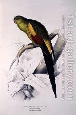 Black-Tailed Parakeet by Edward Lear - Reproduction Oil Painting