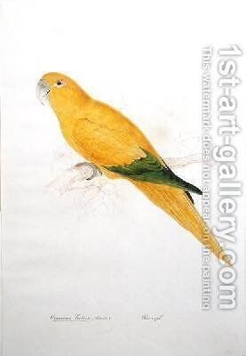 Cornurus luteus by Edward Lear - Reproduction Oil Painting