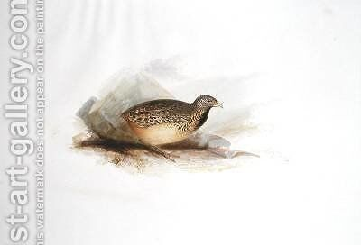 Grouse type by Edward Lear - Reproduction Oil Painting