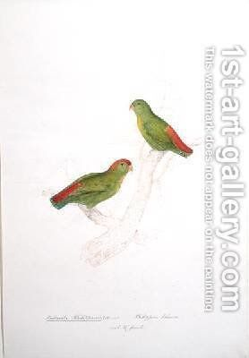 Psittacula Philippensis by Edward Lear - Reproduction Oil Painting