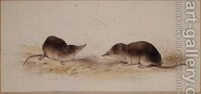 Shrews by Edward Lear - Reproduction Oil Painting