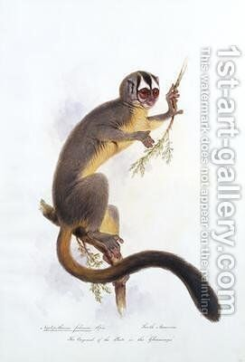 Nyctipithecus felinus Spix by Edward Lear - Reproduction Oil Painting
