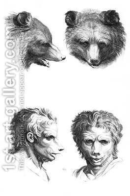 Similarities between the head of a bear and a man by (after) Le Brun, Charles - Reproduction Oil Painting