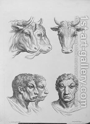 Similarities Between the Head of an Ox and a Man by (after) Le Brun, Charles - Reproduction Oil Painting