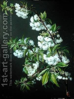 A Sprig of White Blossom by Francisco Lacoma - Reproduction Oil Painting