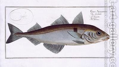 Haddock Gadus Aeglefinus by Andreas-Ludwig Kruger - Reproduction Oil Painting