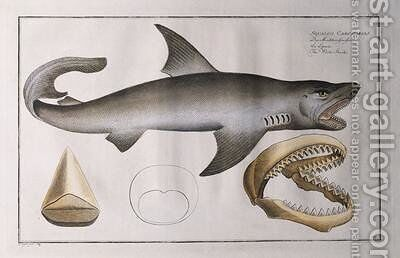 White Shark by Andreas-Ludwig Kruger - Reproduction Oil Painting