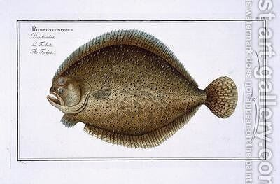 Turbot Pleuronectes Maximus by Andreas-Ludwig Kruger - Reproduction Oil Painting