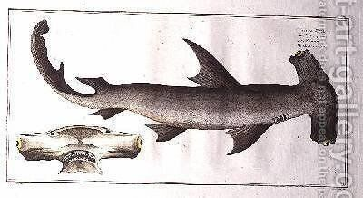 Hammerhead Shark Balance Fish by Andreas-Ludwig Kruger - Reproduction Oil Painting