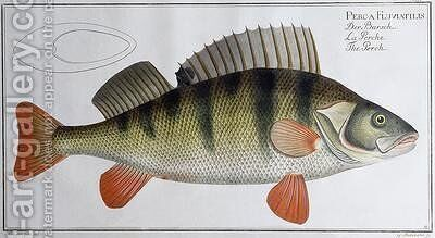 Perch by Andreas-Ludwig Kruger - Reproduction Oil Painting