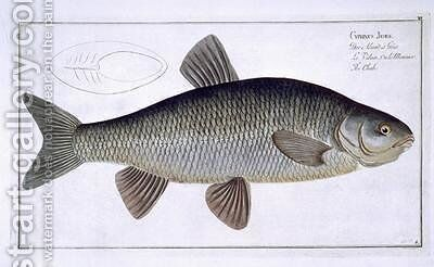Chub Cyprinus Jeses by Andreas-Ludwig Kruger - Reproduction Oil Painting