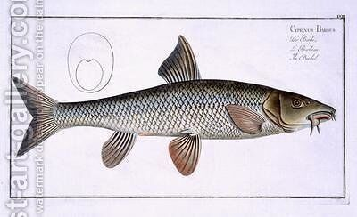Barbel Cyprinus Barbus by Andreas-Ludwig Kruger - Reproduction Oil Painting