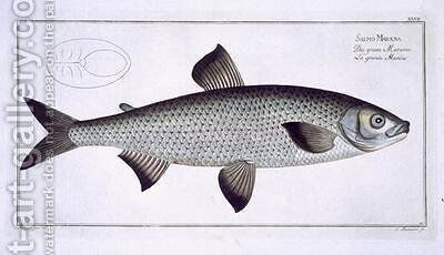 Salmon Salmo Maraena 2 by Andreas-Ludwig Kruger - Reproduction Oil Painting