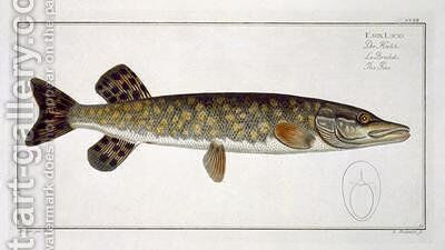Pike Esox Lucio by Andreas-Ludwig Kruger - Reproduction Oil Painting