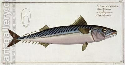 Mackerel Scomber Scomber by Andreas-Ludwig Kruger - Reproduction Oil Painting