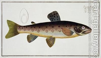 Brown Trout Salmo Iasustris by Andreas-Ludwig Kruger - Reproduction Oil Painting