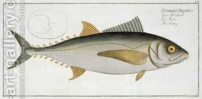 Tuna Scomber Thynnus by Andreas-Ludwig Kruger - Reproduction Oil Painting