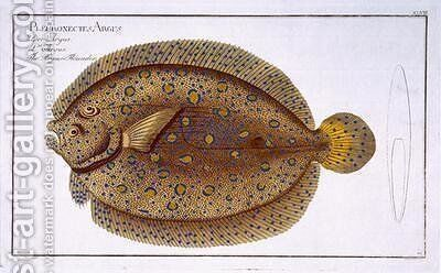 The Argus Flounder Pleuronectes Argus by Andreas-Ludwig Kruger - Reproduction Oil Painting