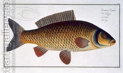 Carp Cyprinus Carpio by Andreas-Ludwig Kruger - Reproduction Oil Painting