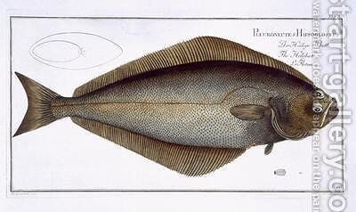 Halibut Pleuronectes Hippoglossus by Andreas-Ludwig Kruger - Reproduction Oil Painting