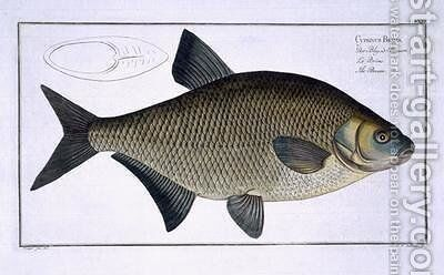 Bream Cyprinus Brama by Andreas-Ludwig Kruger - Reproduction Oil Painting