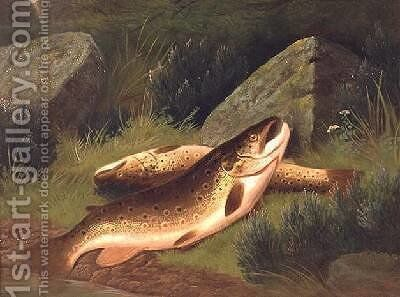 Brown Trout by A. Roland Knight - Reproduction Oil Painting