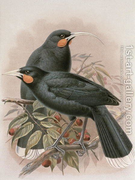Huia by Johan Gerard Keulemans - Reproduction Oil Painting