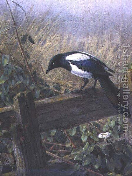 The Magpie by Johan Gerard Keulemans - Reproduction Oil Painting