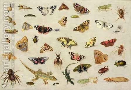A Study of insects by Jan van Kessel - Reproduction Oil Painting