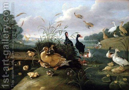Decorative fowl and ducklings by Jan van Kessel - Reproduction Oil Painting