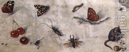 A Study of Various Insects Fruit and Animals by Jan van Kessel - Reproduction Oil Painting